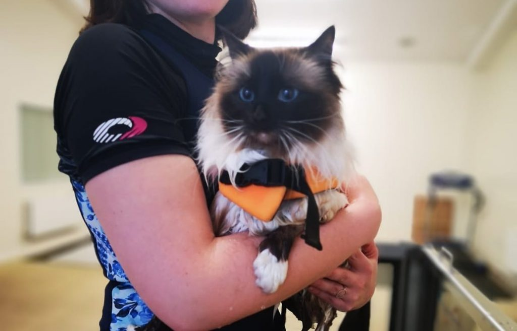 Hydrotherapy for Suki the Cat